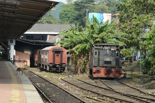 DG237645. Y 683. Kandy. Sri Lanka. 13.1.16.