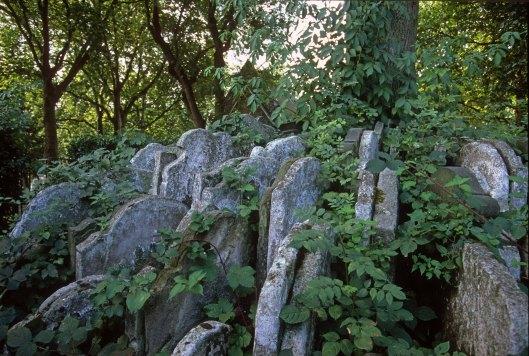 T14164. Gravestones stacked around a tree. St Pancras churchyard. London. England